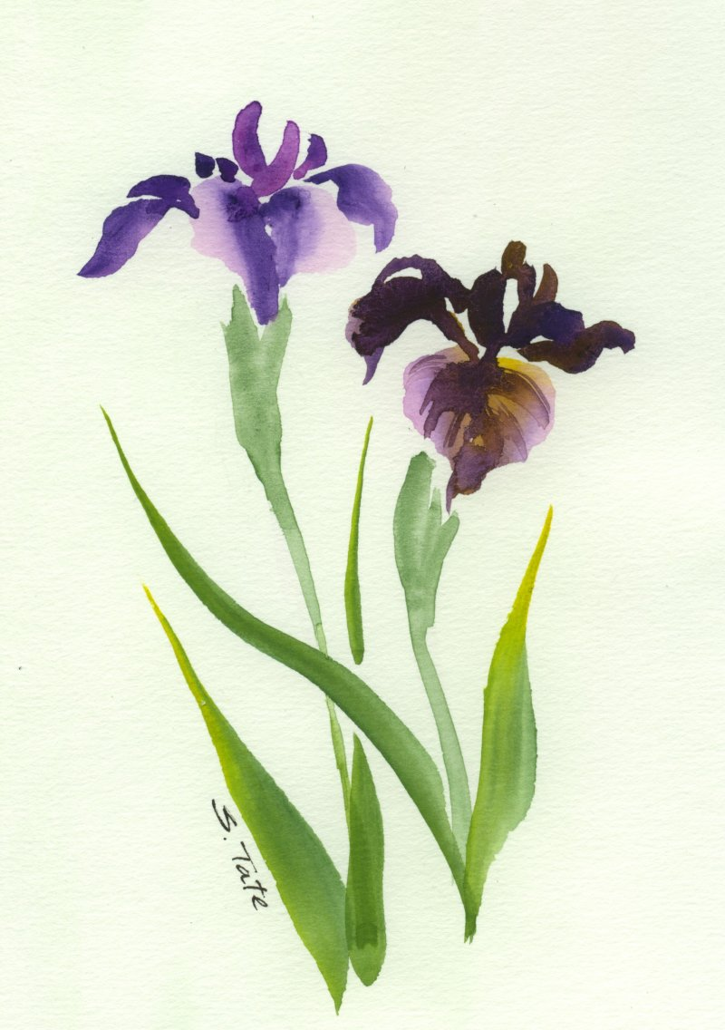 Pics for iris flower watercolor painting for Watercolor painting flowers